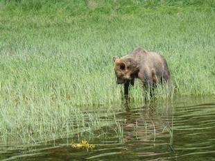 grizbeach1