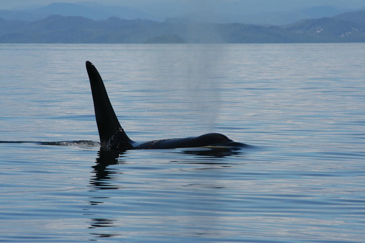 Orca Lodge Vancouver Island