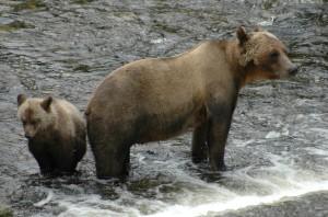Waiting cubs
