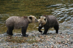 grizzlies kissing
