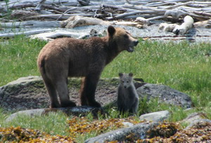 Grizzly moher & cub