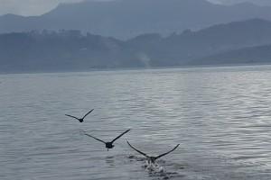 Ducks Departing