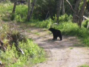 Trapper Rick's Bear