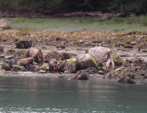 triplet grizzlies