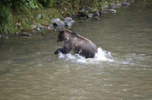 grizzly splash fishing