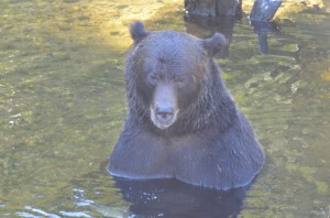 full frontal grizzly