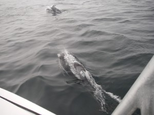 dolphins playing on tour