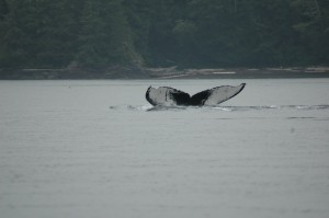 whale tail 3