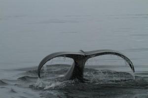orca dive 2