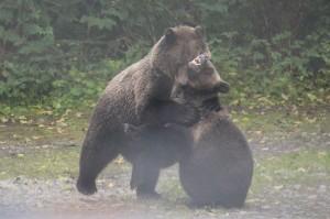 mothr grissly fight cub