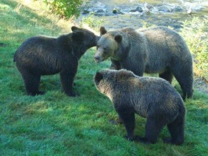 grizzly family meeting