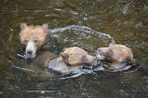 Grizzly Family Feud