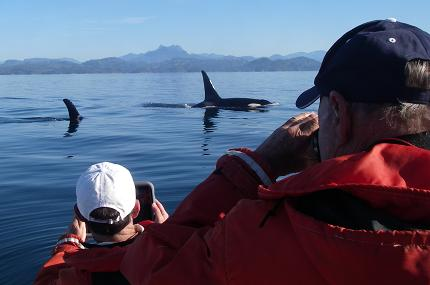 Orca and Guests