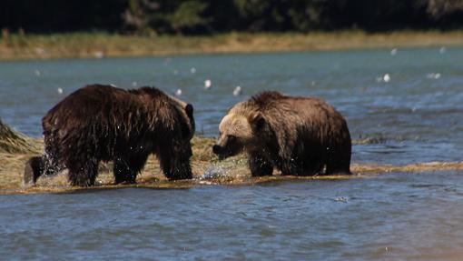 Grizzlies meeting