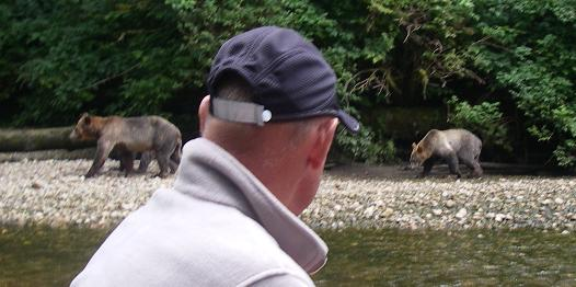 Grizzly bear on a river