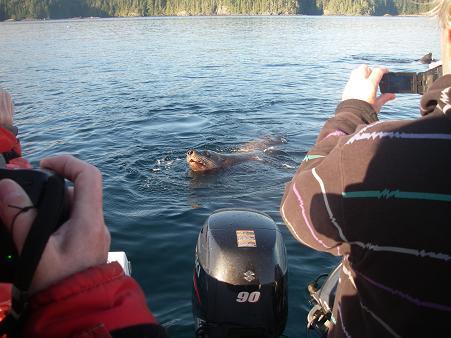 Sea lions close