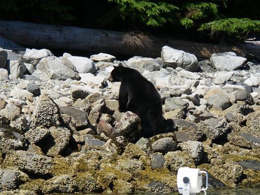 Black Bear Tour