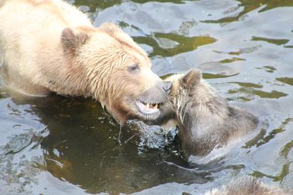 Grizzly mother and cub
