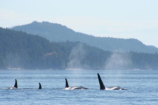 Orca Restline