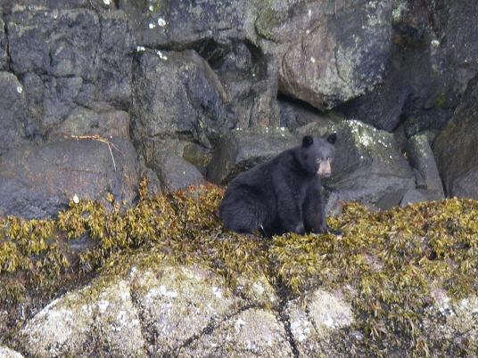 Black Bear on tour