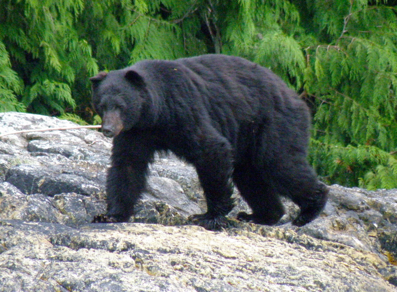 Details of the grizzly bear viewing tours