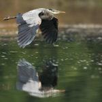 heron knight inlet bc