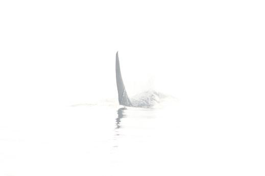 orca fog