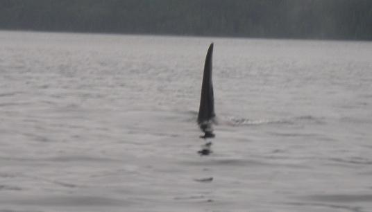 orca interesting