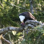 eagles-05