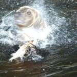 seals_sea-lions-05