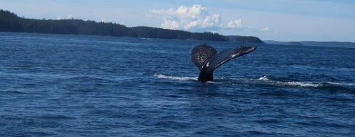perfect whale watching day