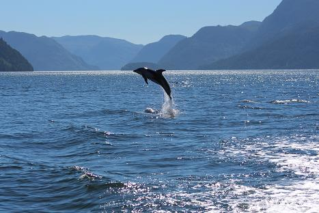 Acrobatic dolphins