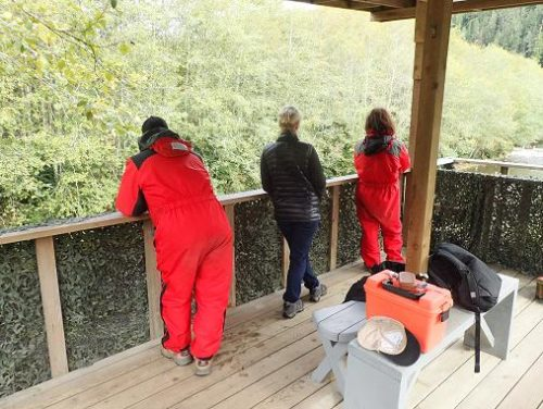 grizzly bear viewing stands