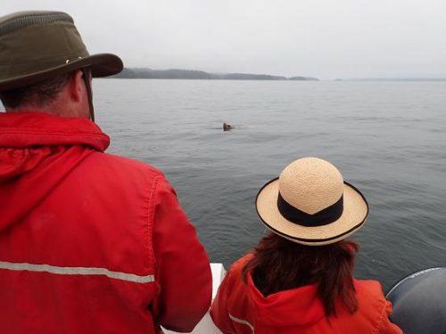 sea lion approaching
