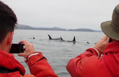 killer whales visit