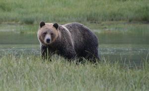 bear estuary