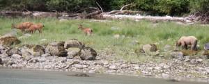 deer-griz