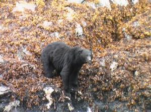 black bear beach