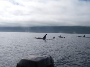 orca por passing