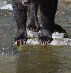 Grizzly Claws