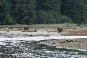 grizzlies wait for tide