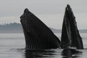 perefect humpback lunge