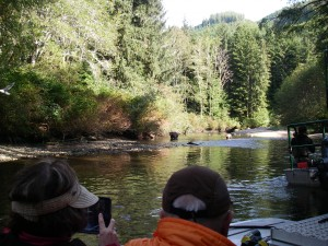 river grizzly watching