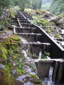 fish ladder around falls