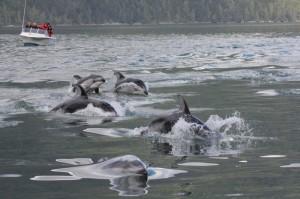 dolphind porposing