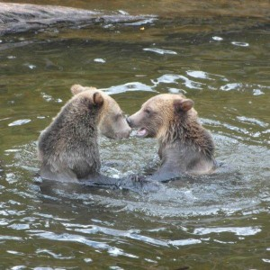 grizzlies sharing catch