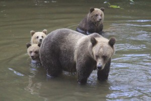 grizzly triplet knight inlet bc