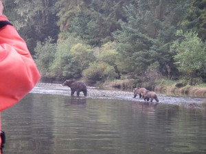 knight inlet river grizzly bears