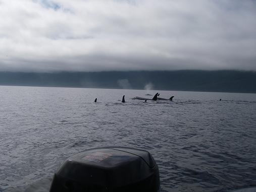 Orca Passing