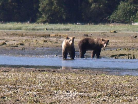 Grizzly Bears Closer